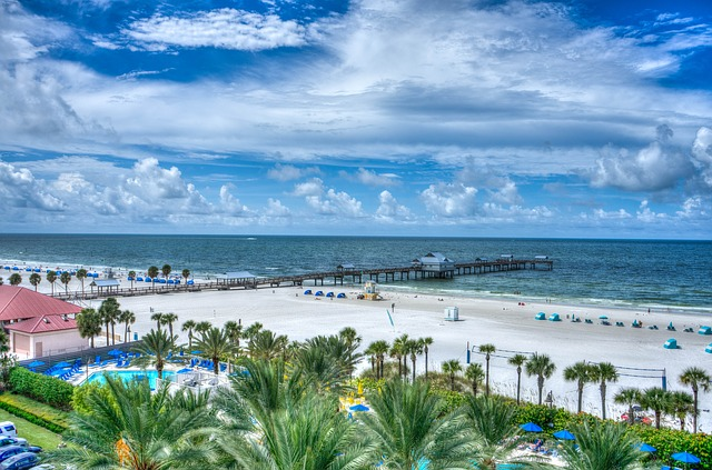 A beach in Florida with palm trees.