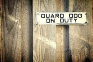 Guard dog on duty sign, safest option if you wish to keep your house protected