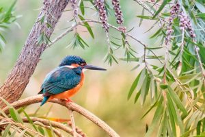 A kingfisher bird on a tree.