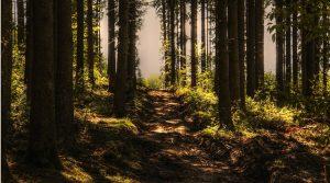 A hidden path through the woods.