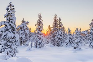 A forest covered in snow as one of the major downsides of moving off-season is the severe weather.