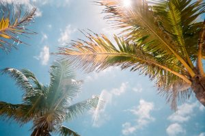 Palm trees and the blue sky during a sunny day as weather is one of the reasons why New Jerseyans move to Florida.